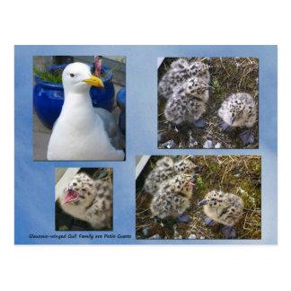 postal Glauco-coa alas de la familia de la gaviota