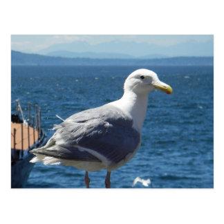postal Glauco-coa alas de la gaviota