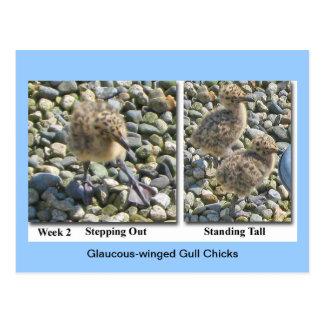 postal Glauco-coa alas de los polluelos