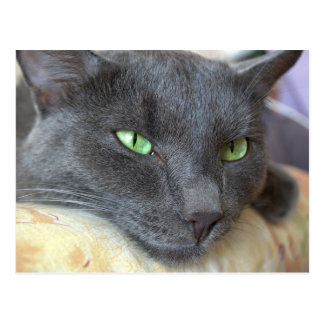 Postal gris del gato