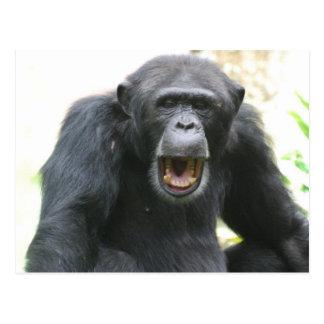 Postal habladora del chimpancé