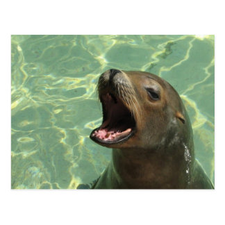Postal habladora del león marino