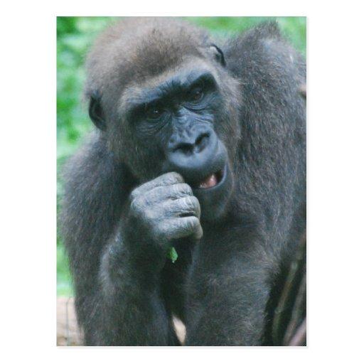 Postal hambrienta del gorila