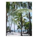 Postal hawaiana del paraíso