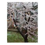 Postal helada del árbol