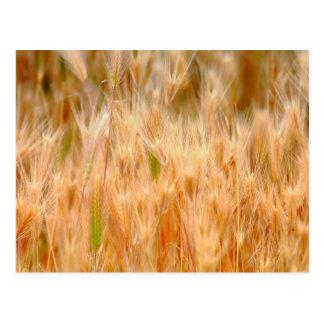 Postal herbosa de oro del campo