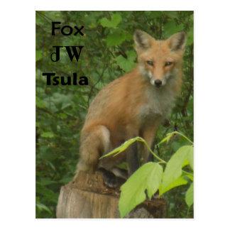 Postal hermosa cherokee de la foto del Fox