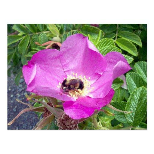 Postal hermosa de la abeja