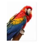Postal hermosa de la foto del pájaro del loro