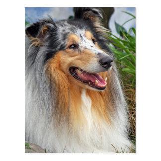 Postal hermosa de la foto del perro áspero del
