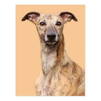 Postal hermosa de la foto del perro de Whippet