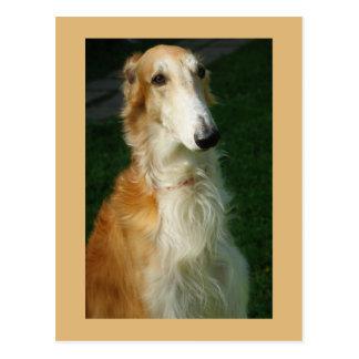Postal hermosa de la foto del perro del Borzoi