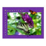Postal hermosa de las mariposas