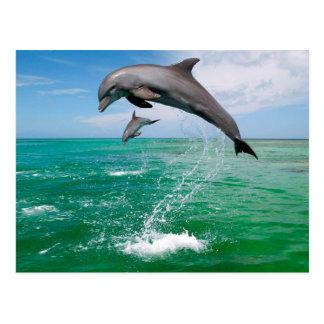 Postal hermosa de los delfínes