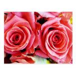 Postal hermosa de los rosas