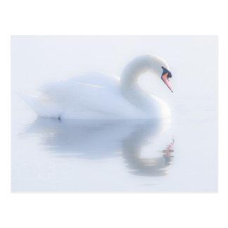 Postal hermosa del cisne