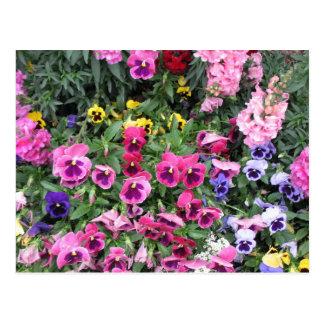 Postal hermosa del jardín