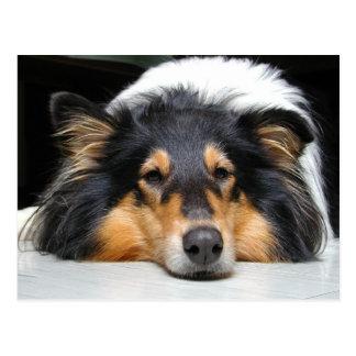 Postal hermosa del retrato de la nariz de perro de