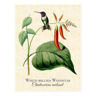 Postal hinchada blanco del arte del colibrí de