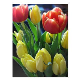 Postal holandesa de los tulipanes