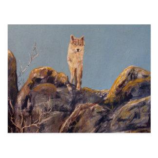 "Postal horizontal del ""lobo solitario"""