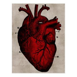 Postal humana del corazón