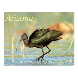 Postal - Ibis Blanco-hecho frente Arizona