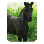 Postal ideal del caballo