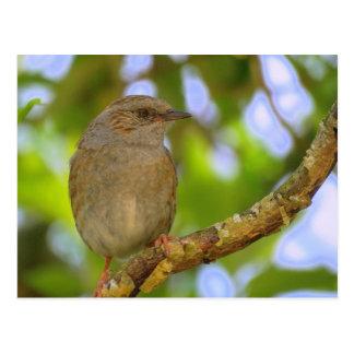 Postal inglesa del wildbird
