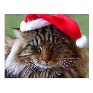 Postal irritable del gato del navidad