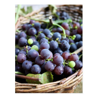 Postal italiana de las uvas
