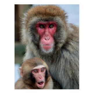 Postal japonesa de los monos de Macaque
