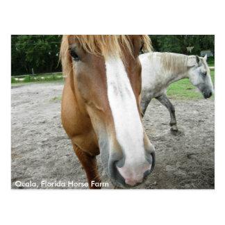 Postal la Florida de los caballos de granja del ca