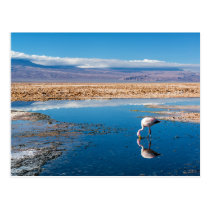 Postcard, Lake in San Pedro de Atacama, Chile Postcard