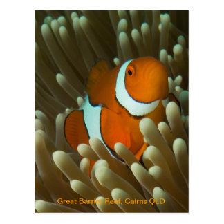 Postal linda de Clownfish
