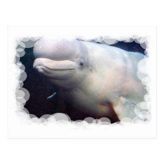 Postal linda de la ballena de la beluga