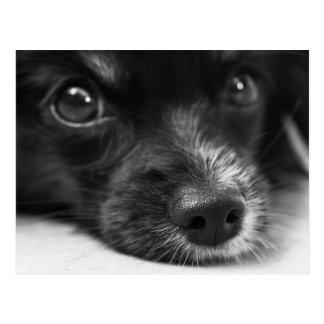 Postal linda de la cara del perrito
