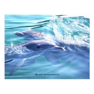 Postal linda de la foto de los delfínes