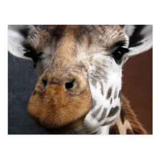 Postal linda de la jirafa