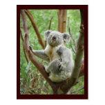 Postal linda de la koala