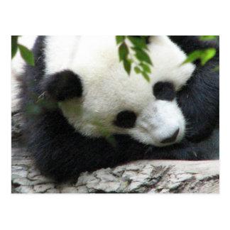 Postal linda de la panda