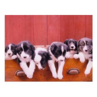 Postal linda de los perritos del border collie