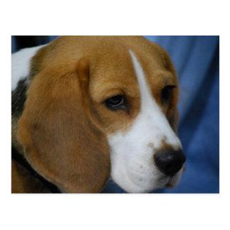 Postal linda del beagle