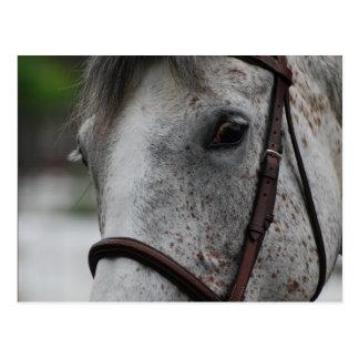 Postal linda del caballo del Appaloosa