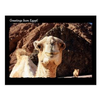 Postal linda del camello