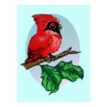 Postal linda del cardenal del bebé