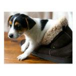 Postal linda del perrito de Ugg (Jack Russell Terr