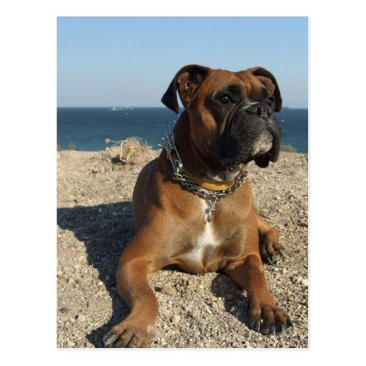 Postal linda del perro del boxeador