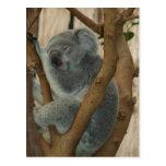 Postal linda el dormir del oso de koala