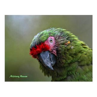 Postal: Macaw militar Tarjeta Postal